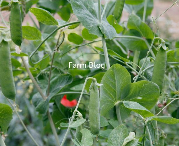 Farm Blog